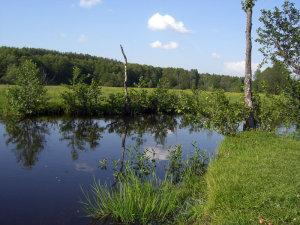 река Унеча
