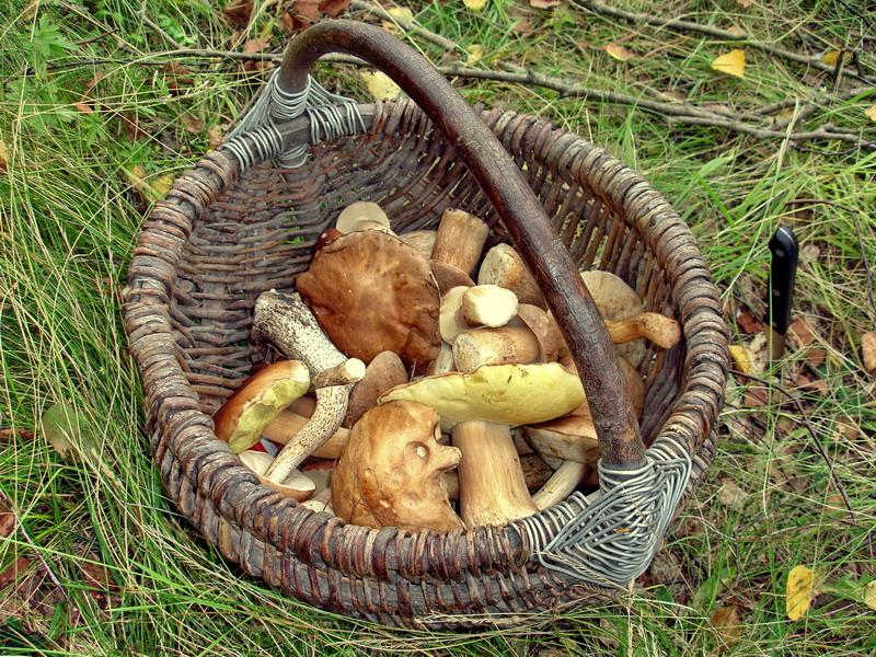 Они и в Африке грибы, но в Унече лучше :)