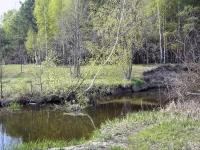 Речка и лес