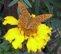 бабочка крылышками...