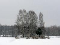 Островок зимой
